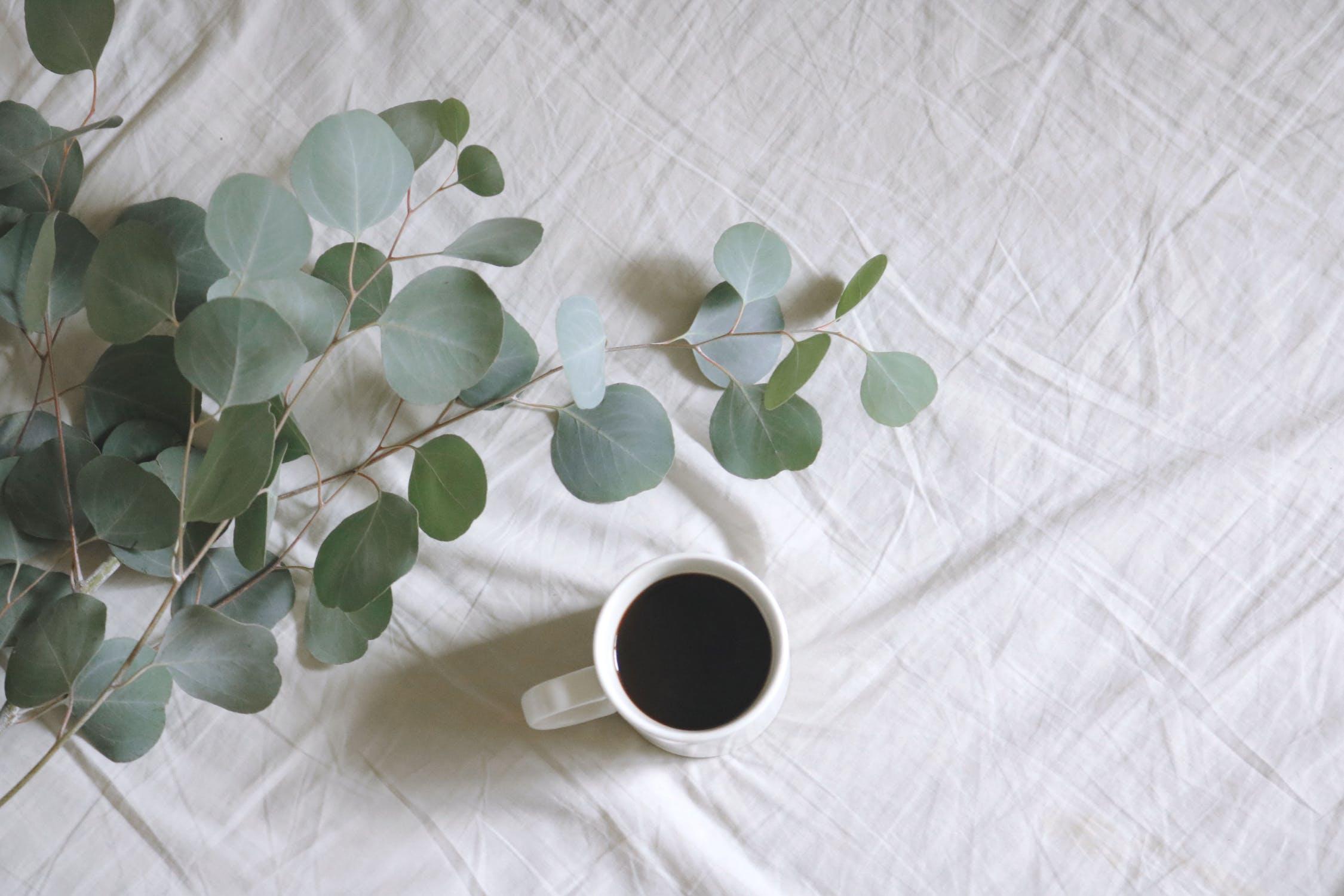 eucalyptus and coffee